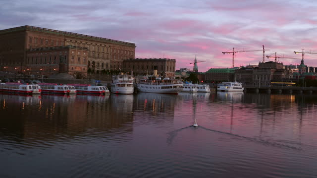 DRONE: A swan swimming in Stockholm at sunset