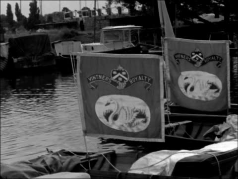swan upping ceremony taking place on the river thames; england: surrey: river thames: ext members of the three swan upping companies boarding boats... - cygnet stock videos & royalty-free footage