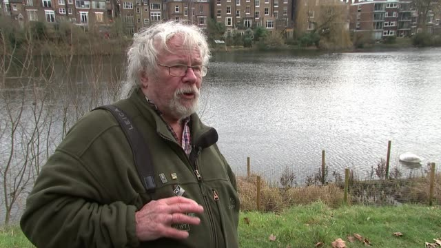 stockvideo's en b-roll-footage met 20 swans from windsor flock die from suspected bird flu location unknown various shots of swans on river bill oddie setup shot with reporter /... - bill oddie