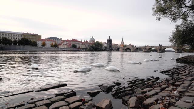 vídeos de stock, filmes e b-roll de cisnes no rio de vltava e na ponte de charles em praga em república checa - mala strana