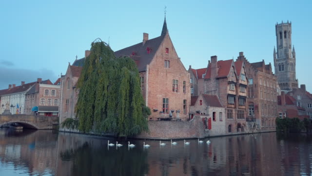 swans of bruges, belgium - gable stock videos & royalty-free footage