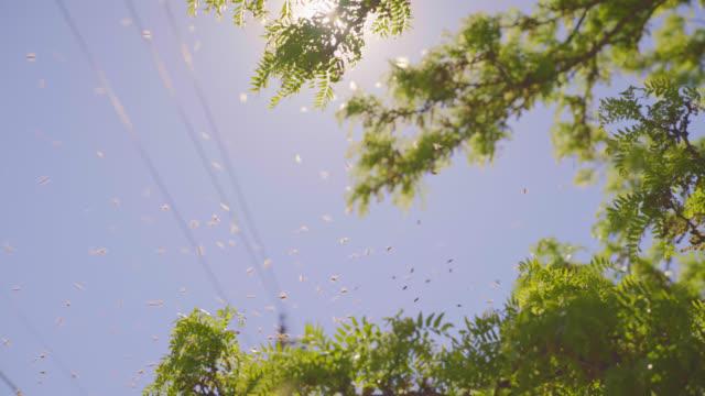 stockvideo's en b-roll-footage met een zwerm gonst door de takken - honingbij