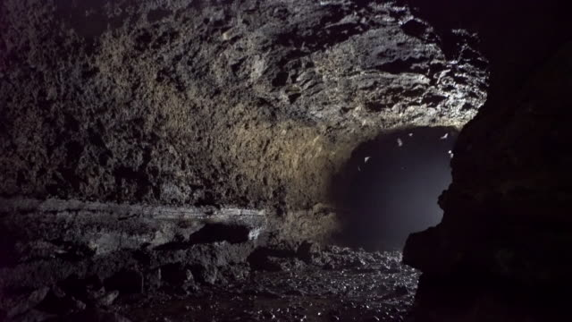 swarm of bats flying inside a cave - cave stock videos & royalty-free footage