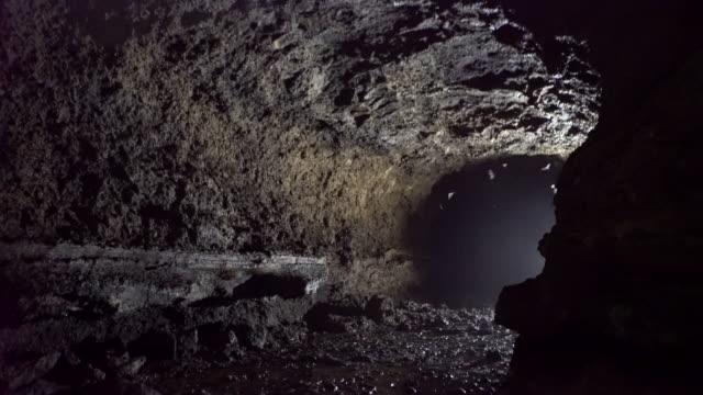 swarm of bats flying inside a cave - 洞窟点の映像素材/bロール