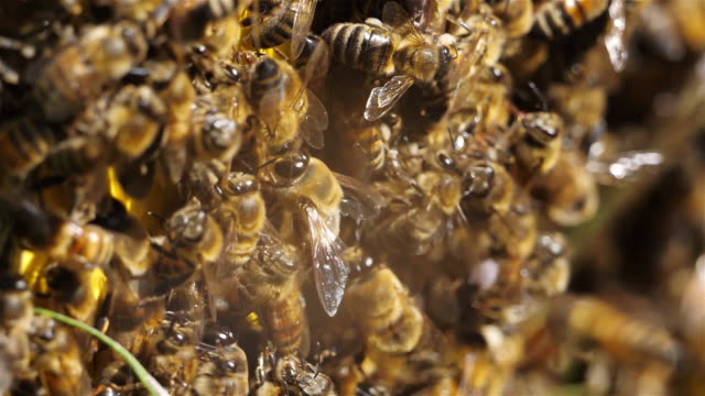 swarm of bees, occitanie, france - beehive stock videos & royalty-free footage