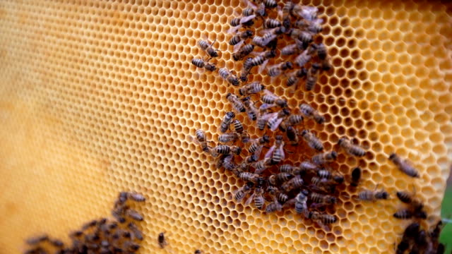 swarm of bees on a beehive - endangered species stock videos & royalty-free footage