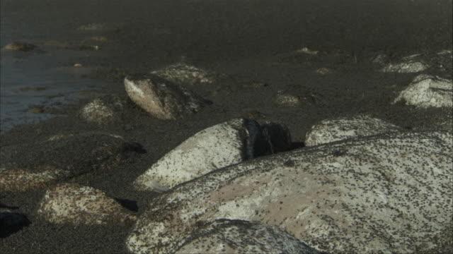 a swarm of black insects flies around a shoreline. - 虫の群れ点の映像素材/bロール