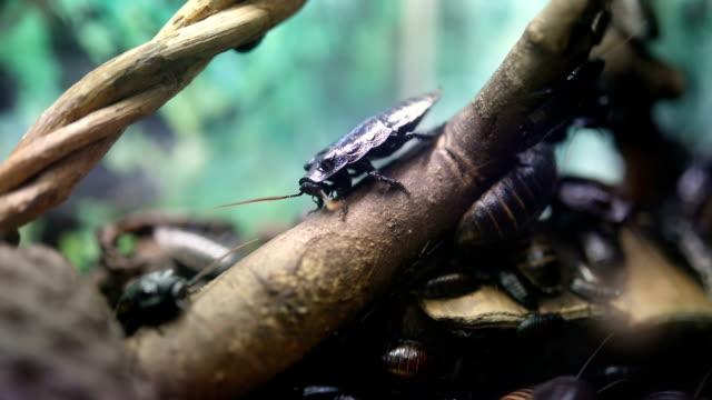 ゴキブリの群れ - ゴキブリ点の映像素材/bロール