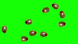 Swarm of colorado beetles, CG animated on green screen, seamless loop