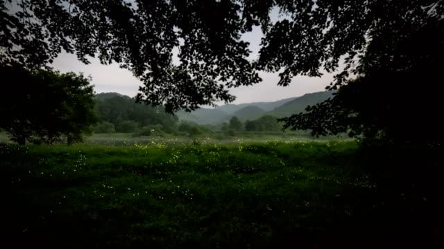 vídeos de stock e filmes b-roll de swarm of fireflies amongst trees and grass in geumsangun, chungcheongbuk-do - pirilampo escaravelho