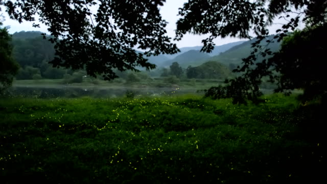swarm of fireflies amongst trees and grass in geumsangun, chungcheongbuk-do - グローワーム点の映像素材/bロール
