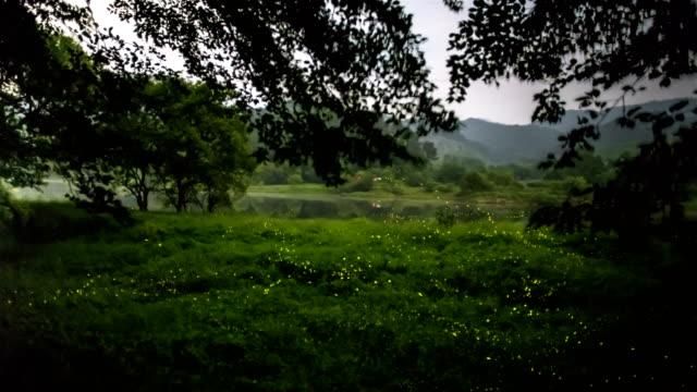 stockvideo's en b-roll-footage met swarm of fireflies amongst trees and grass in geumsangun, chungcheongbuk-do - gloeiworm