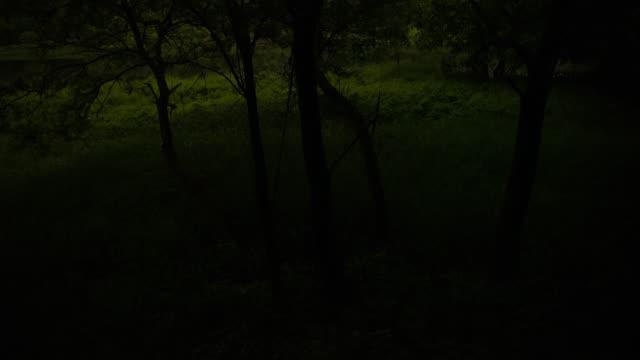 vídeos de stock, filmes e b-roll de swarm of fireflies / geumsan-gun, chungcheongnam-do, south korea - invertebrado