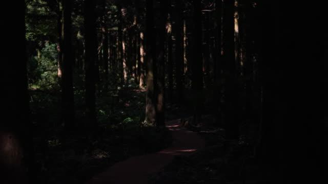 swarm of fireflies on walkway of saryeoni forest path / bijarim-ro, jeju-si, jeju-do, south korea - straßenrand stock-videos und b-roll-filmmaterial