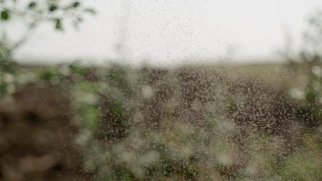 空中のハエの群れ。 - 虫除け点の映像素材/bロール