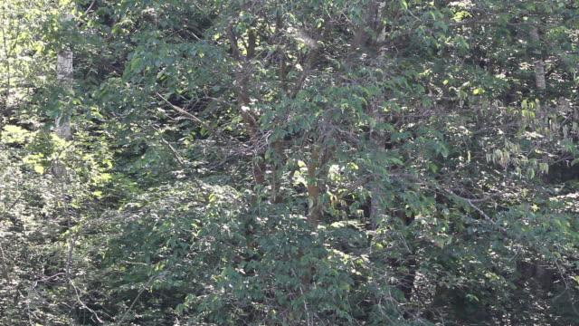 日光のブヨの群れ - 虫の群れ点の映像素材/bロール