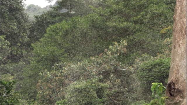 ms swarm of insect in woodland, ngamba island chimpanzee sanctuary, ngamba island, uganda - swarm of insects stock videos & royalty-free footage