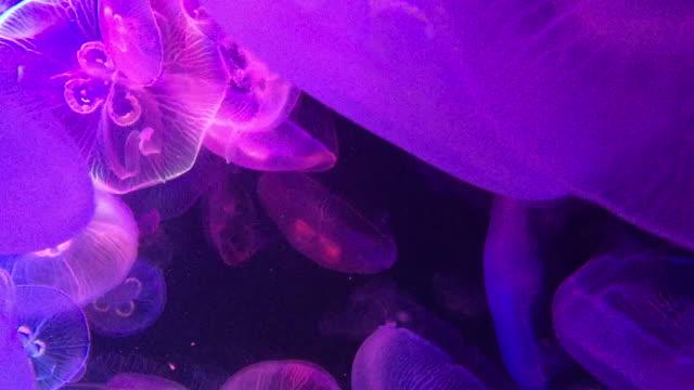swarm of jellyfish - 1分以上点の映像素材/bロール