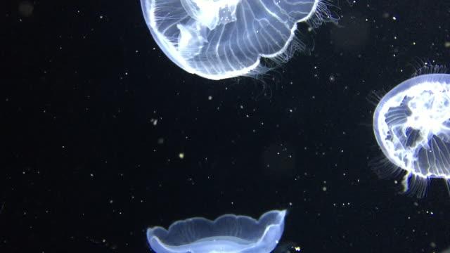 swarm of jellyfish - medium group of animals stock videos & royalty-free footage