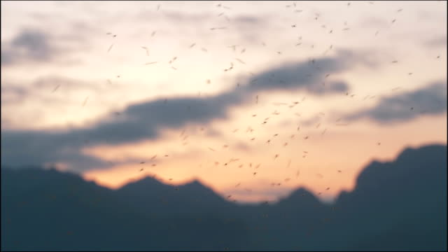 swarm of mosquitoes at sunset - swarm of insects stock videos & royalty-free footage