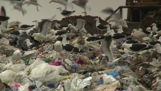 a swarm of seagulls scatters as a bulldozer pushes garbage at a landfill in south africa. available in hd. - bulldozer stock videos and b-roll footage