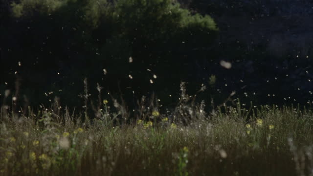 A swarm of white flies hover over grasses and wildflowers.
