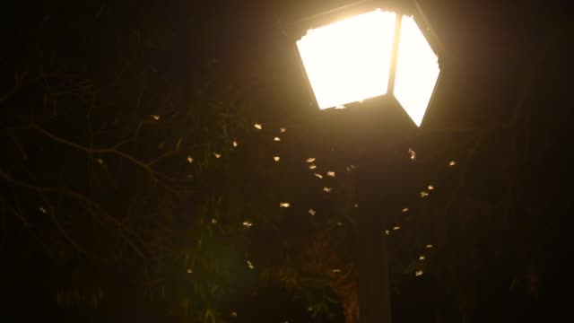 vidéos et rushes de swarms of flying ants are flying beside the street lamp - éclairage public