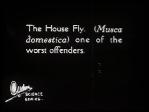 swat the fly! [aka the house fly] - 1 of 23 - fly swat stock videos & royalty-free footage