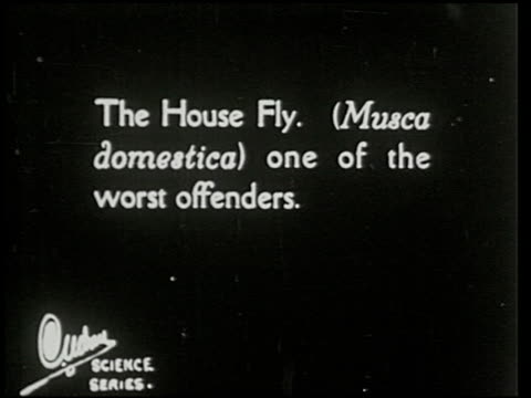 swat the fly! [aka the house fly] - 2 of 23 - fly swat stock videos & royalty-free footage