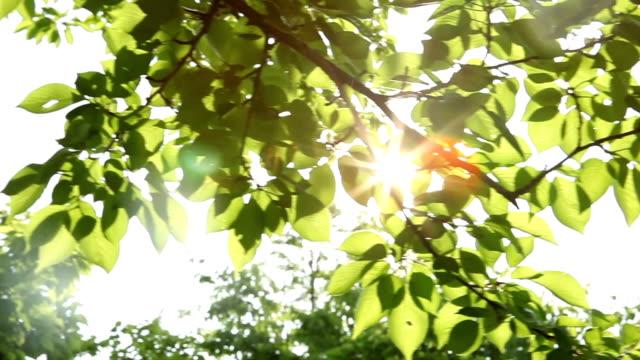 sway の葉 - 木漏れ日点の映像素材/bロール