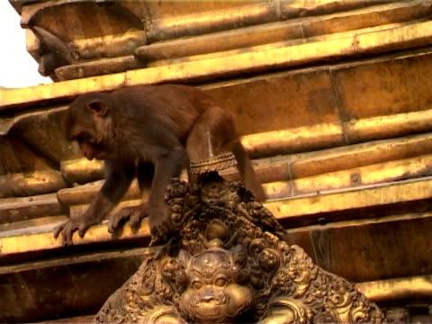 swayambhunath golden roof with monkey, kathmandu, nepal - golden roof stock videos and b-roll footage