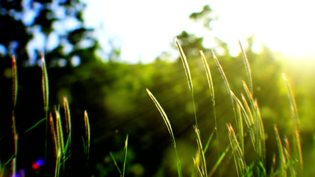 swaying grass and sunlight (loopable) - tranquility stock videos & royalty-free footage