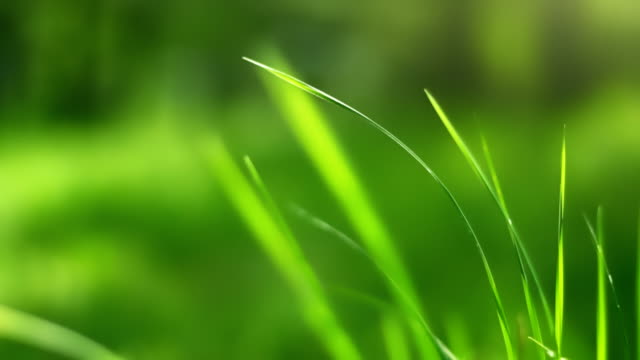 swaying grass (loopable) - blade of grass stock videos & royalty-free footage