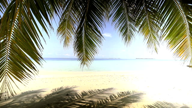 Swaying motion of coconut leafs, Maldives