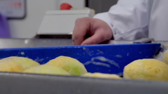 swede is pushed into machinery for processing - crucifers stock videos & royalty-free footage