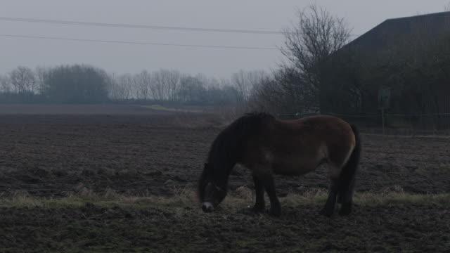 vídeos y material grabado en eventos de stock de sweden field mule - vector