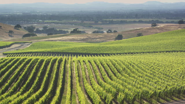 Sweeping Drone Shot Over Northern California Vineyard in Sonoma County