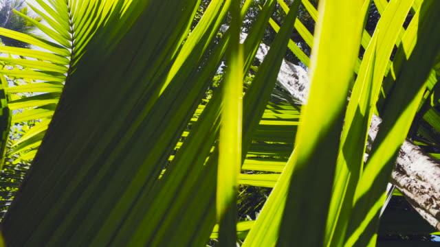 vídeos de stock, filmes e b-roll de sweeping view of new zealand bush. - arbusto tropical