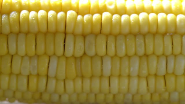 sweet corn - corn cob stock videos & royalty-free footage