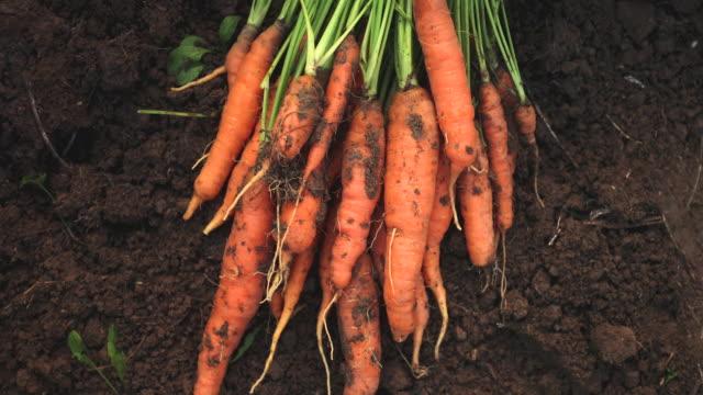 vídeos y material grabado en eventos de stock de dulces zanahorias - manojo