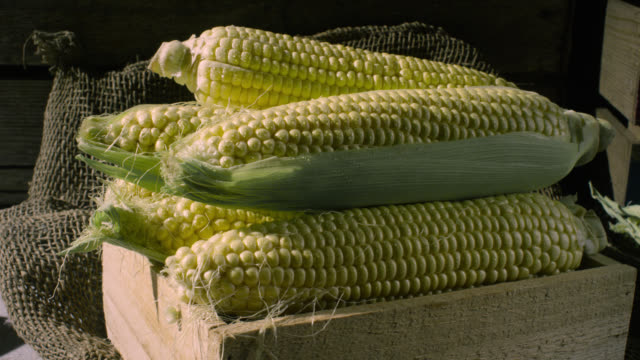 sweetcorn cobs, uk - corn cob stock videos & royalty-free footage