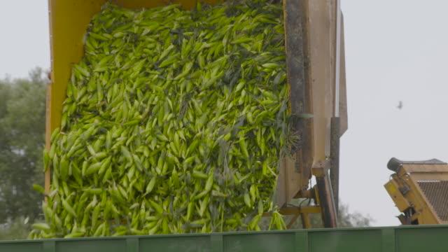 slomo sweetcorn harvest pours into trailer, uk - farm stock videos & royalty-free footage
