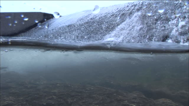 Sweetfish(Plecoglossus altivelis) In Kushida River