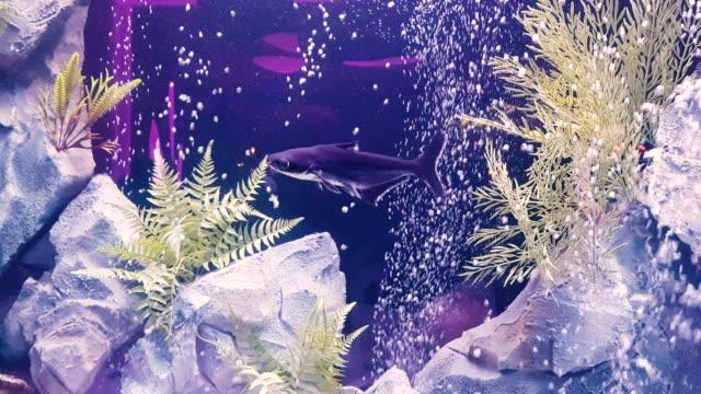 Schwimmen in einem großen Aquarium