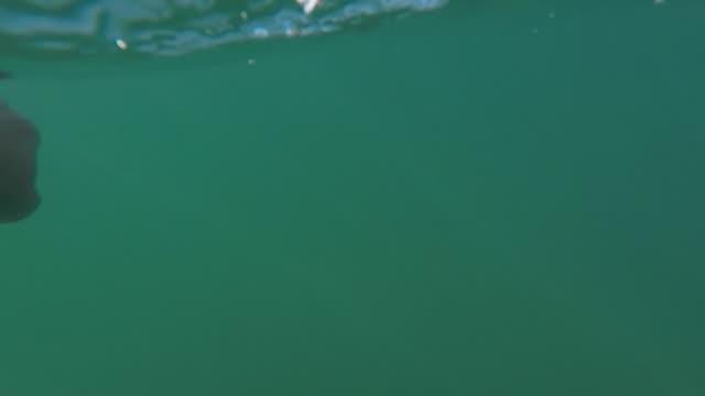 pov swim in the sea - frankreich stock-videos und b-roll-filmmaterial
