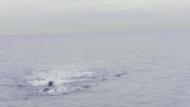 vídeos de stock, filmes e b-roll de swimmer with goggles and swimming hat swimming in the ocean - touca de natação