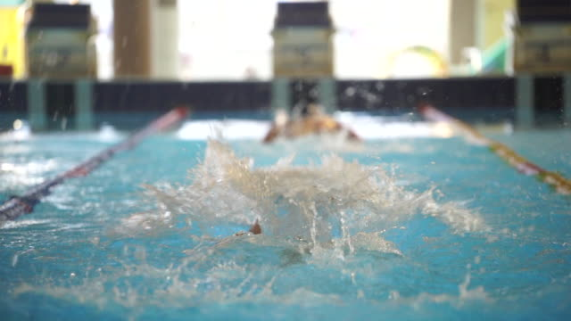 swimmers doing laps in indoor pool - butterfly stroke stock videos and b-roll footage