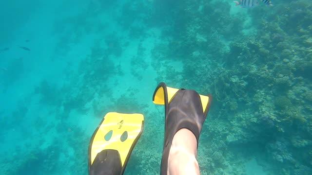 stockvideo's en b-roll-footage met de gele flippers van de zwemmer in het overzees. - zwemvlies