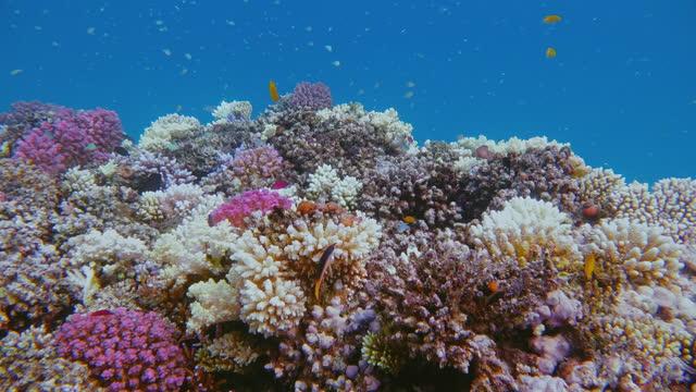vídeos de stock e filmes b-roll de swimming about beautiful coral reef on red sea - marsa alam - egypt - cardume de peixes