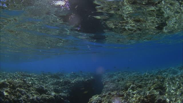 vídeos de stock, filmes e b-roll de slo mo pov swimming at coral reef / moorea, tahiti, french polynesia - territórios ultramarinos franceses